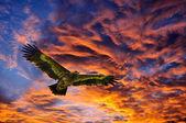 a sky háttérben repülő sasok