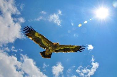 """Картина, постер, плакат, фотообои """"летающие в небе орлы """", артикул 37771095"""