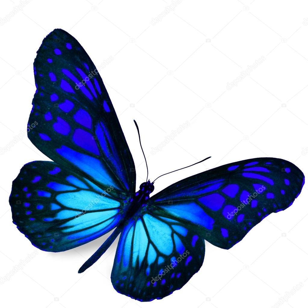 青い蝶 — ストック写真 © thawat...