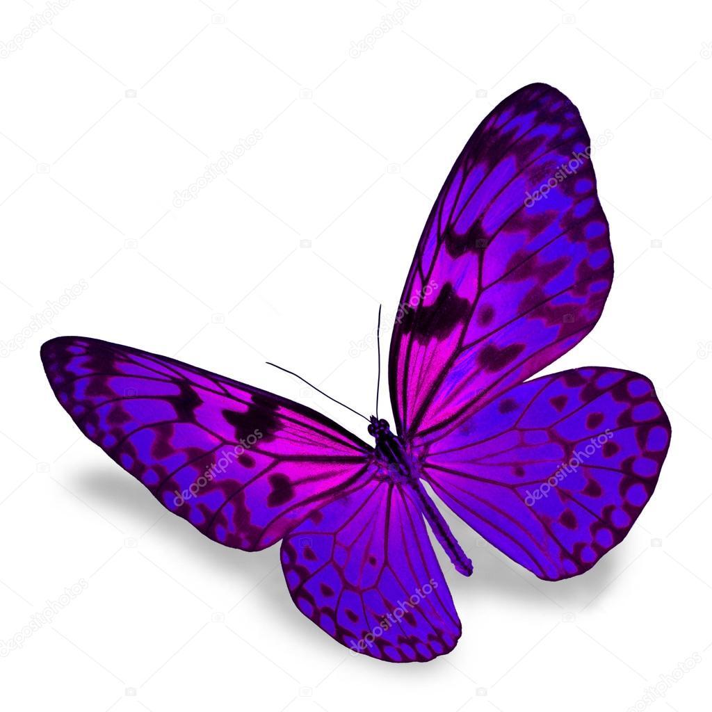 Mariposa púrpura — Foto de Stock