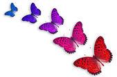 öt színes pillangók