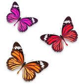 elszigetelt pillangók