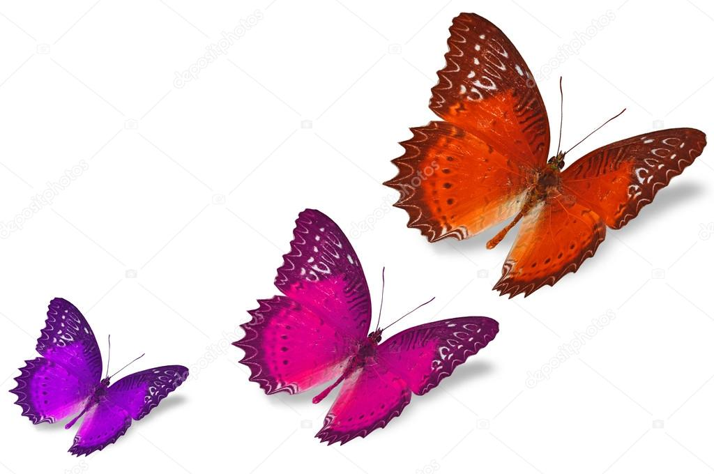Colorful butterflies — Stock Photo © thawats #42183917