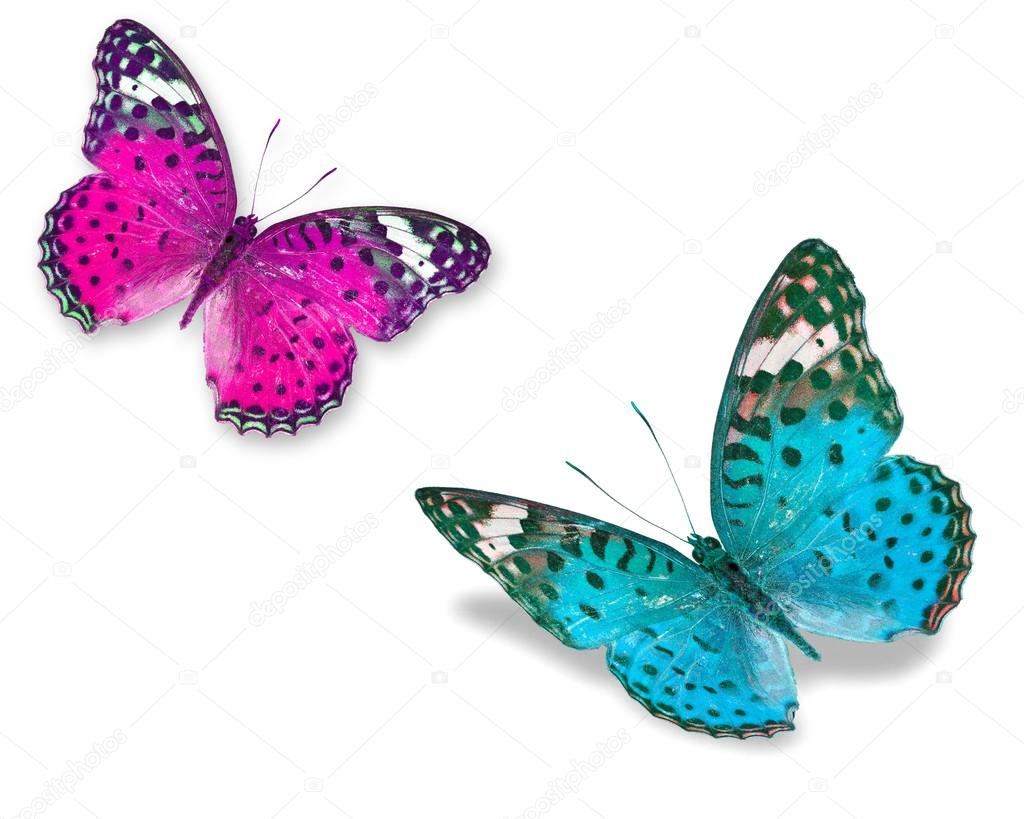 Colorful butterflies — Stock Photo © thawats #42184279
