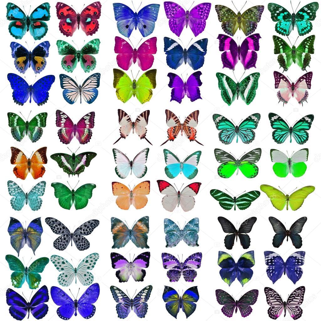 Collezione di farfalle colorate foto stock thawats for Foto farfalle colorate