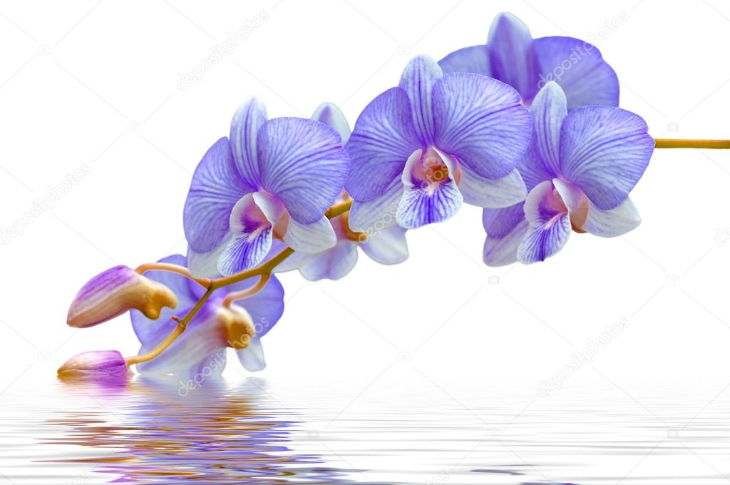 flowers purple orchids