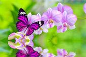 Fotografie motýl na orchideje květiny