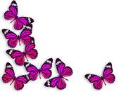 háttér-pillangó