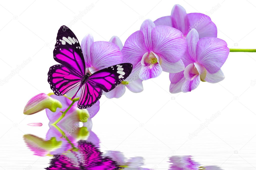 butterfly on orchids flowers