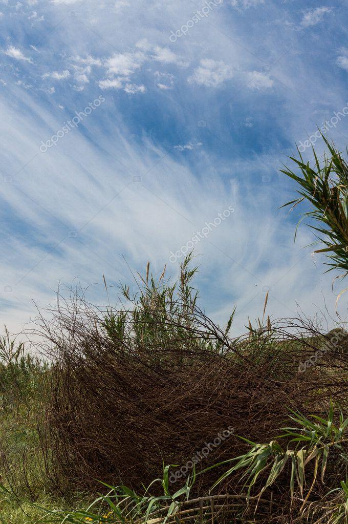 Landscape, Blue Sky and Bush