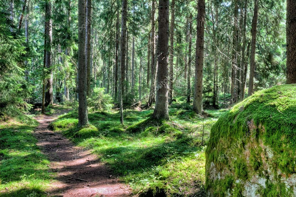 Green forest landscape in the summer