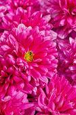 Fotografie Closeup of purple flowers