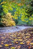 podzimní listí vedle malé lesní potok