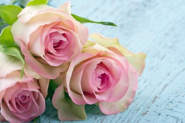 Pink roses on light blue wooden background
