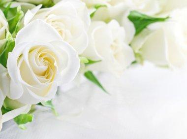 Closeup of white roses