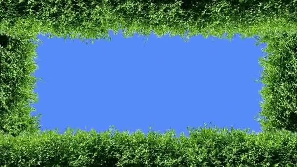 zelený rámeček