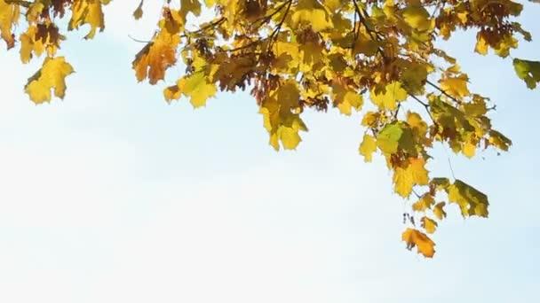 podzimní zeleň