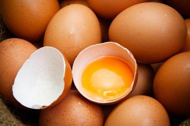 broken chicken eggs and egg yolk