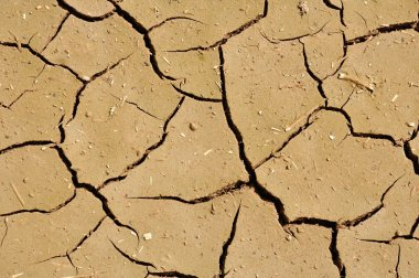 Wide cracks in the dried up ground