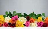 Színes rózsák és a szürke háttér