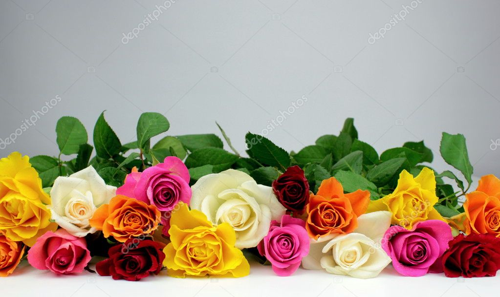 Colorful roses and grey background