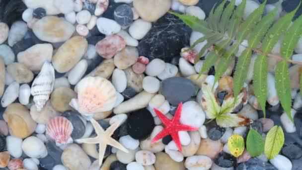 hvězda ryby, oblázkové kameny a mušle