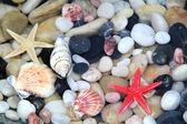 Starfish, seashell, and colorful pebble .