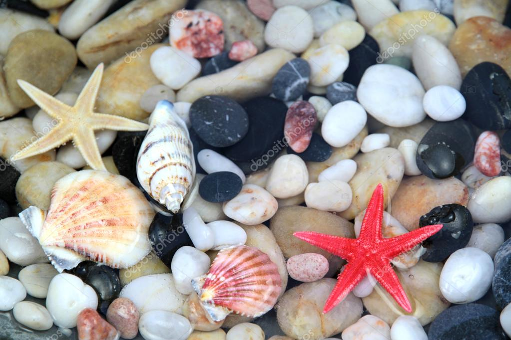 Starfish, seashell, and colorful pebble .