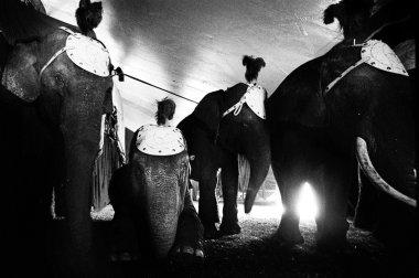 Circus Medrano - Cirque Medrano