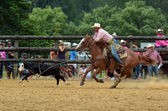 Neuseeland Rodeo - Steer roping