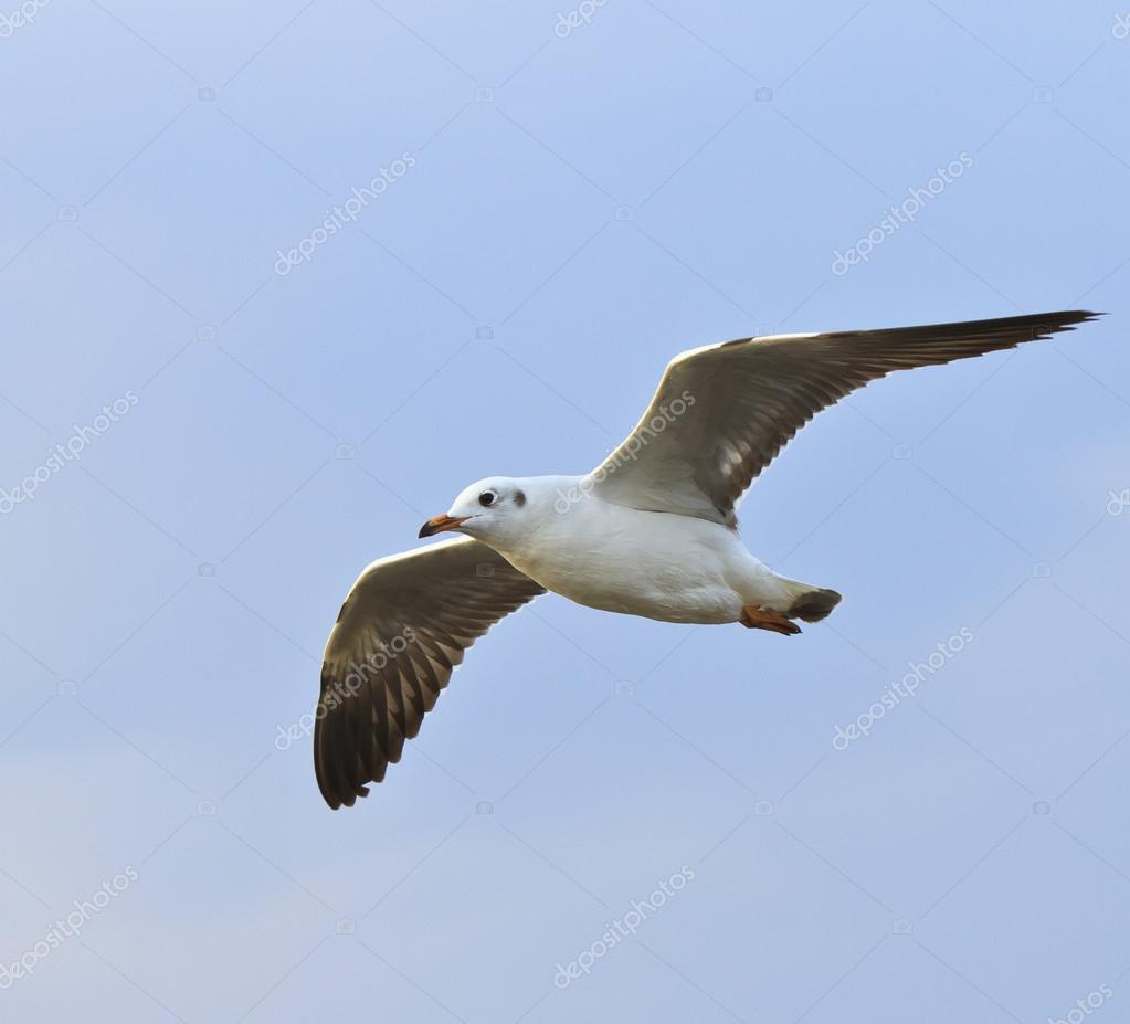 Photo collection oiseau qui vole for Photo oiseau