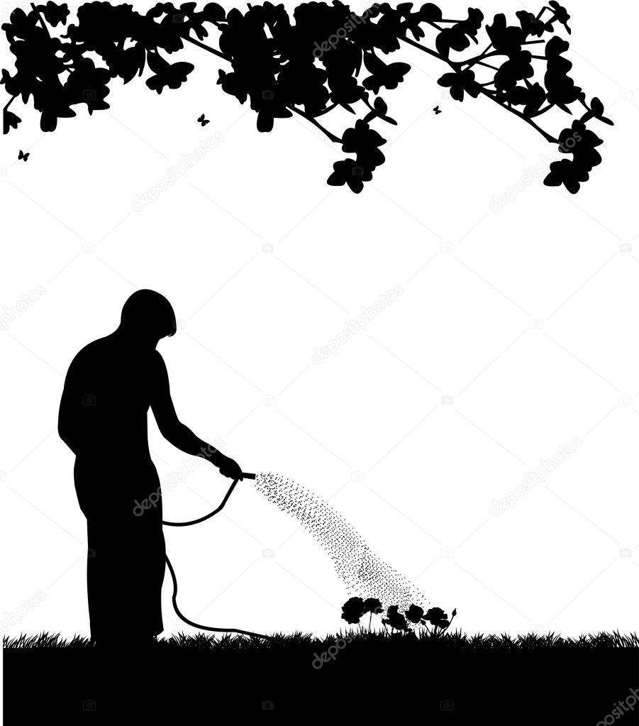 Man gardener watering flowers, roses with hose silhouette