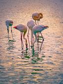 Parco nazionale di fenicotteri rosa camargue, Francia