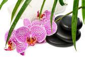 Fotografie lázně Zátiší s orchidejí, černé kameny, zelené listy a bílé