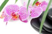 Fotografie lázně Zátiší s svlékl orchidej, černé kameny, zelené listy