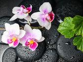 Fotografie Spa koncept bílé s červenými orchidej (mini phalaenopsis) květ