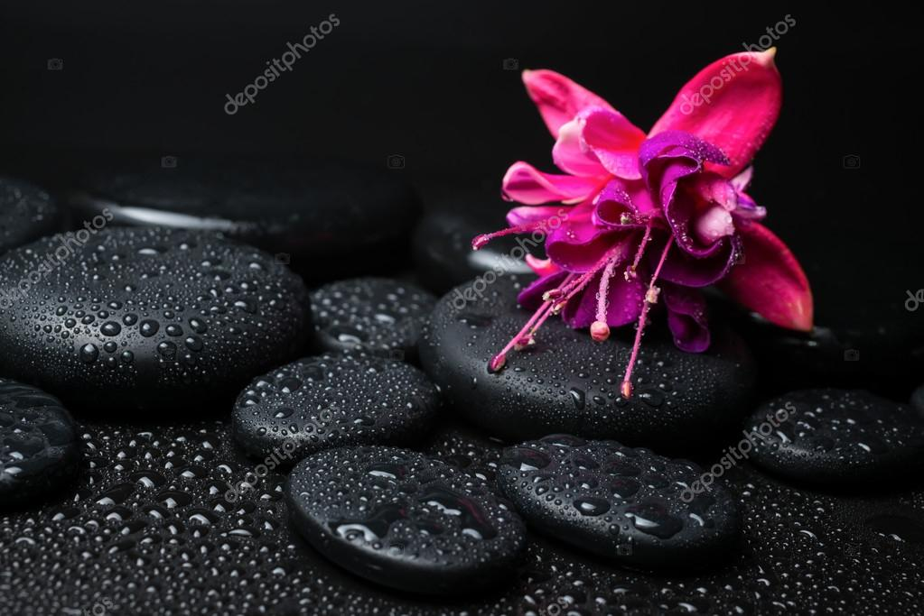 Spa concept of pink with red fuchsia flower and zen stones with