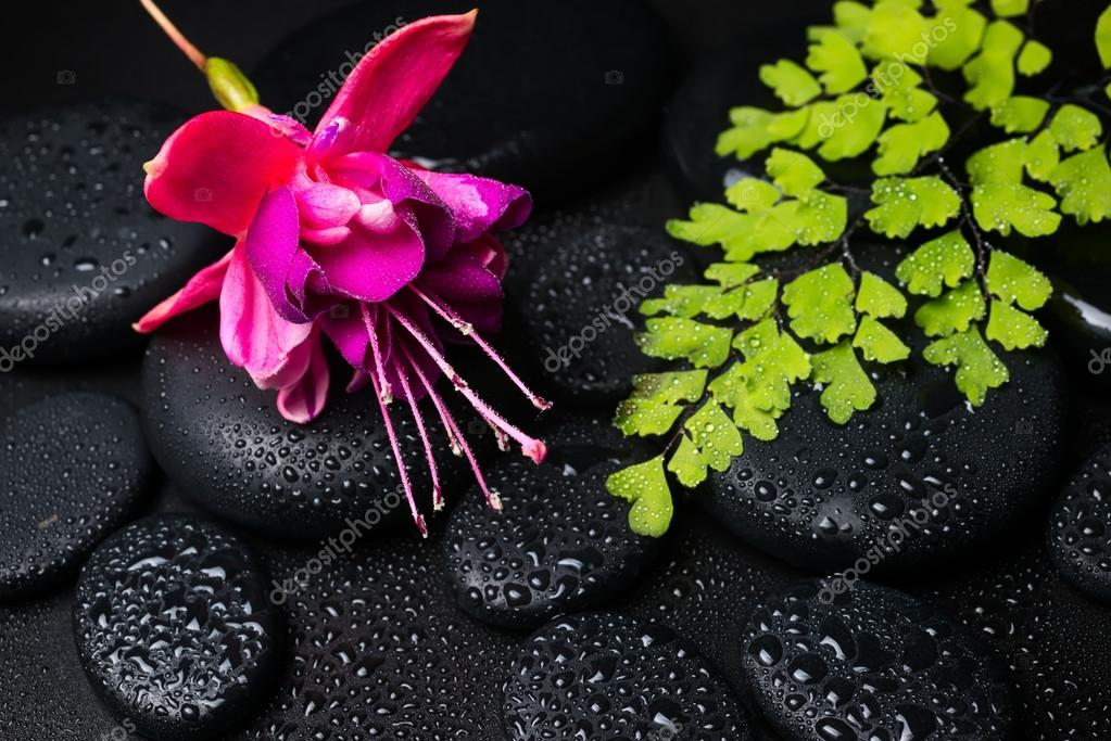 Spa concept with pink with red fuchsia flower, green branch  and