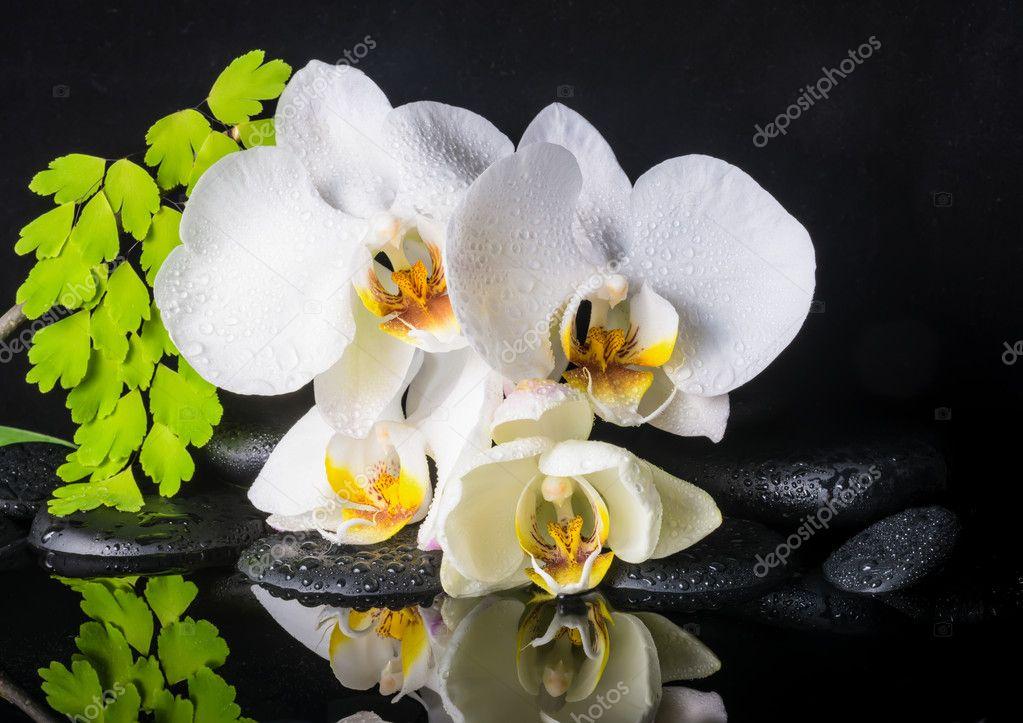 Impostazione bella spa di bran orchidea bianca for Orchidea acqua