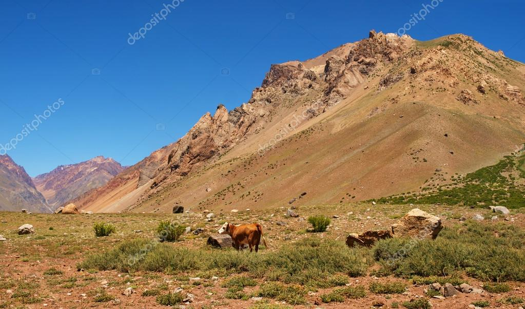 Mountain valley in the Andes with cattle eating grass, Argentina, South America