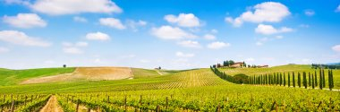 Panoramic view of scenic Tuscany landscape with vineyard in the Chianti region, Tuscany, Italy