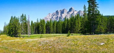 Panoramic view of beautiful landscape with field of flowers and Rocky Mountains in the background in Jasper National Park, Alberta, Canada