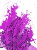 drawn iris