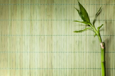 Bamboo mat abstract background
