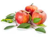 red apples with leafs on white background