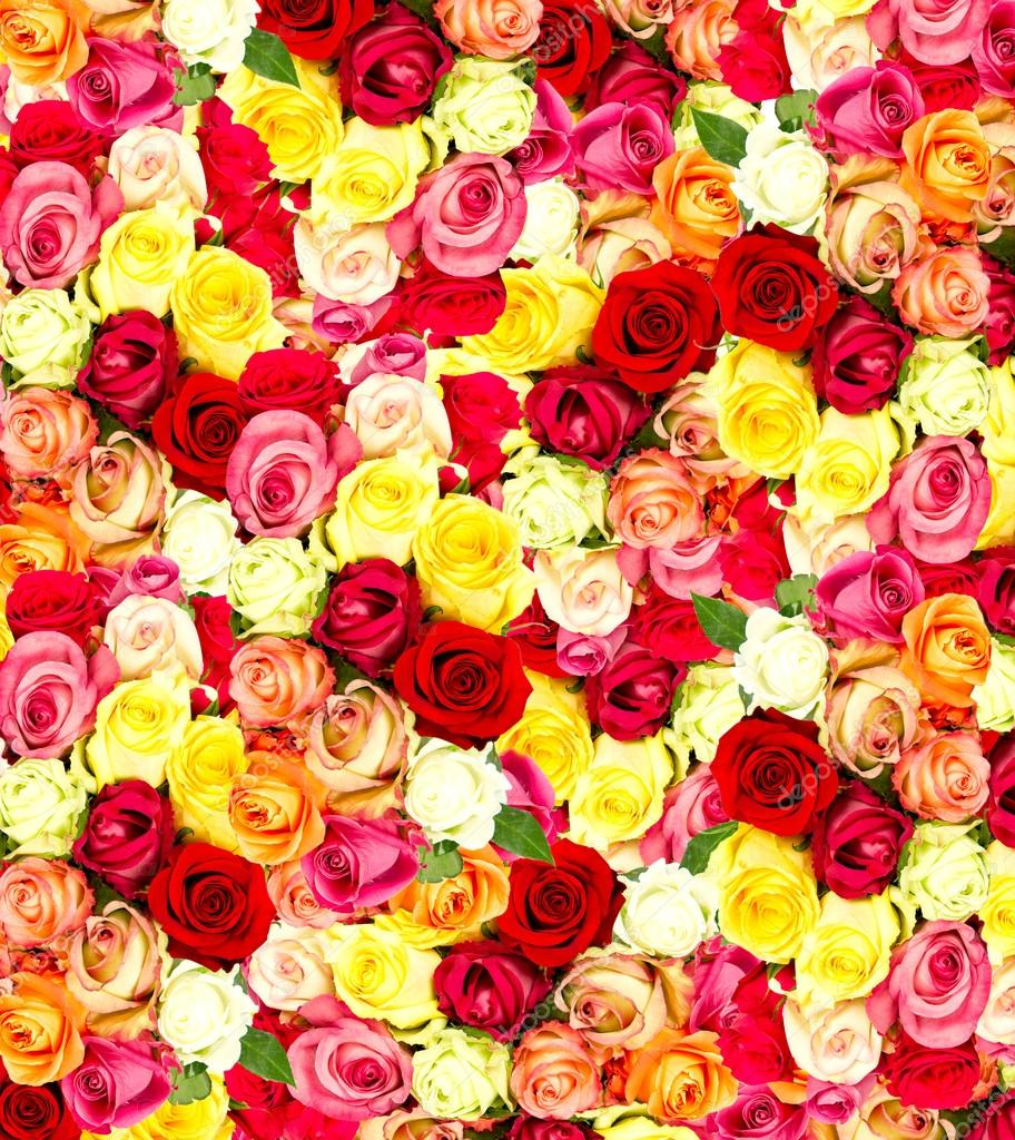 Wallpapers Hd Flowers Roses Roses Colorful Flowers Wallpaper Stock Photo C Liligraphie