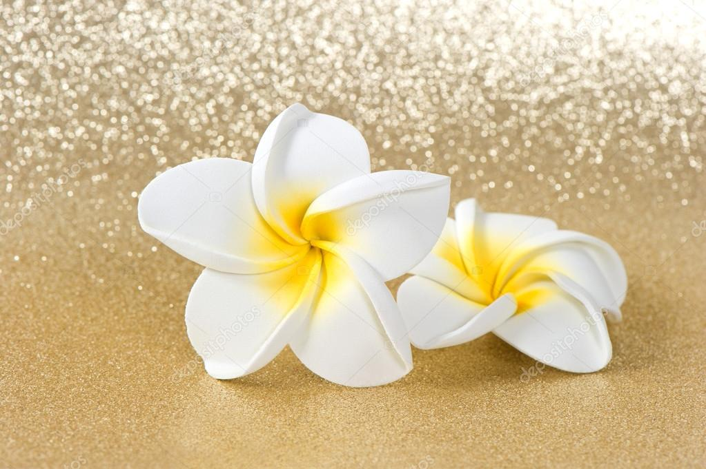 Frangipani spa flowers over shiny golden background