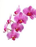 krásná orchidej květina na bílém pozadí