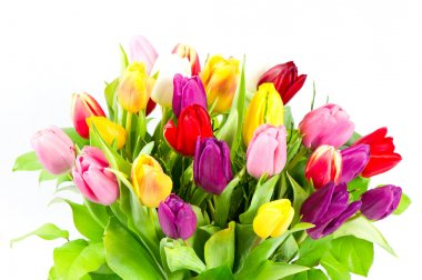 bouquet of colorful tulips flowers