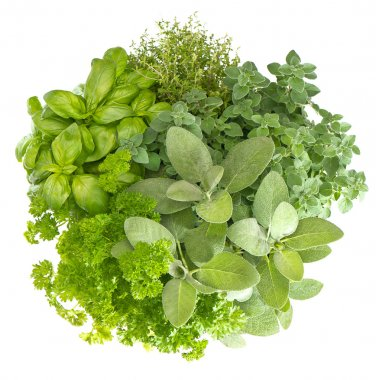 Variety fresh herbs isolated on white